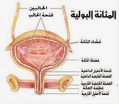 الغابة سهل القراءة تلميع علاج التهاب المثانة البولية عند الرجال Comertinsaat Com